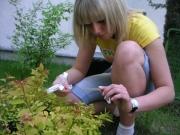ogrodniczki13